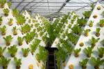 Интересный способ выращивания!